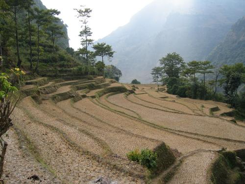 Rice paddies after harvest