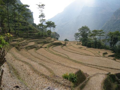 Rice paddies after harvest