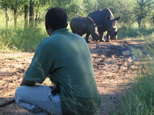 "Guide ""Sonny Boy"" stalking the white rhinos"