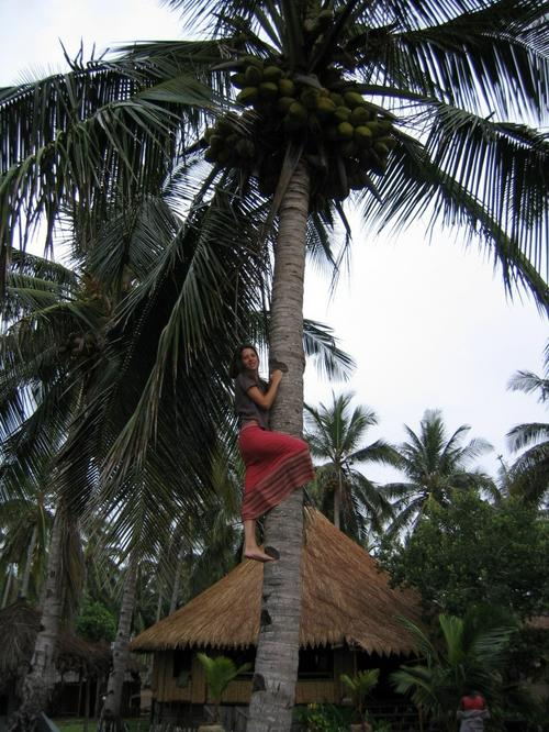 Gathering coconuts for breakfast