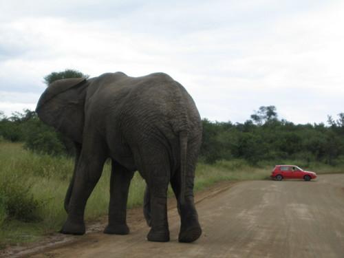 Horny elephant seeks hot red hatchback...