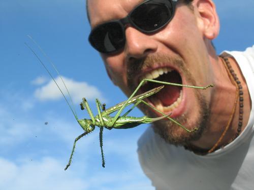 Man vs. Enormous Grasshopper