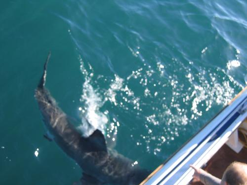 Our first visitor of the shark dive