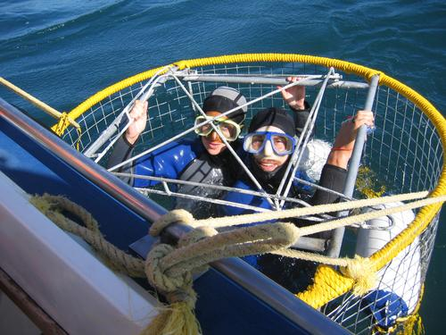 Cage diving with Great White Sharks: a good idea?