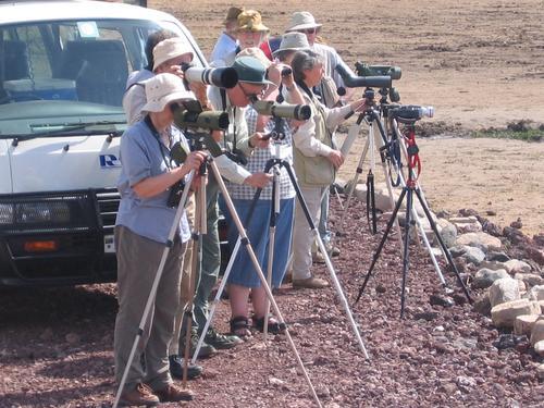 The British Paparazzi at Lake Manyara's Hippo Pool